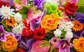 she sent me flowers
