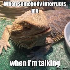 lizard memes album on imgur