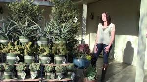 Succulent Rock Garden by Succulents More Than Just A Rock Garden Plant Youtube