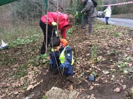 native hedgerow plants planting a native hedge on petersham common environment trust