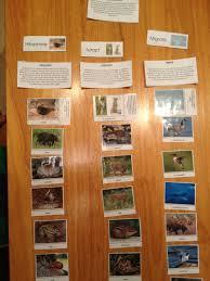 Animals In The Winter Animals In The Winter Healthy Mama Info