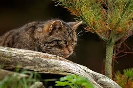 scottish animals u0026 wildlife visitscotland
