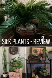 silk plants silk plants review gardening how s