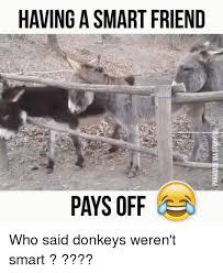 Funny Donkey Memes - 25 best memes about donkeys donkeys memes