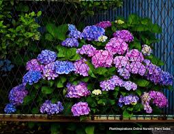 australian garden flowers garden plants that like shade home outdoor decoration