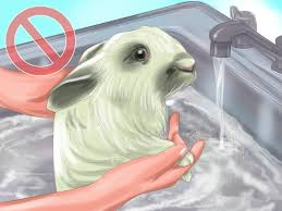 how to raise rabbits 14 steps with pictures wikihow
