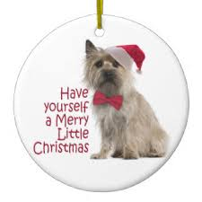 cairn terrier gifts on zazzle