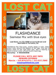 lexus crenshaw torrance south bay pets coverage of animal issues by the staff of the