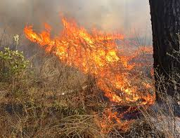 Definition For Wildfire by Causes Of Forest Fires How Wildfires Start