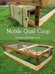 Batting Cage For Backyard by Australian Backyard Birds Zen Garden Backyard Small Backyard Ideas