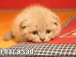 Sad Kitten Meme - i haz a sad i can has cheezburger