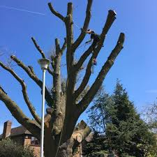 tree surgery in berkshire tree surgeon trees managed trees
