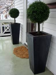 i m thinking about topiaries for the front porch since i