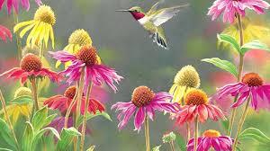 Hummingbird Flowers Flowers Bird Flowers Spring Hummingbird Flower Hd Image Wallpaper
