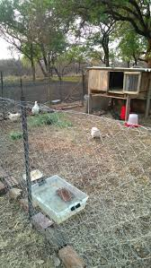 silkie breeders owners south africa backyard chickens