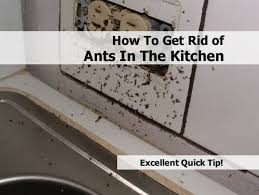 in house meaning small black ants in kitchen black ants in house meaning islam how