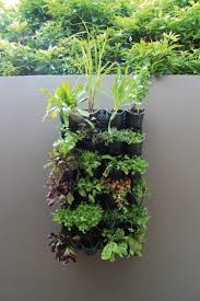Indoor Herb Garden Kit Australia - greenwall u2013 vertical gardening holman industries
