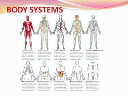The Human Body Picture Human Body Systems Images U2013 Defenderauto Info