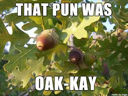 Tree Puns Tree Puns Punpedia