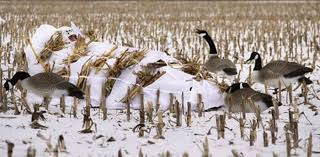 Layout Hunting Blinds Prepping Your Layout Blind For Duck Season Grand View Outdoors