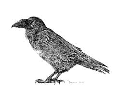 bird u0027s thomas s duane tsd fine art u0026 gifts inc