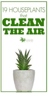 best plants for air quality 15 houseplants for improving indoor air quality indoor air quality