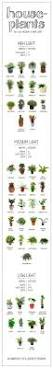 23 diagrams that make gardening so much easier houseplant