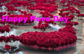 whatsapp wallpaper red rose day images for whatsapp dp profile wallpapers free download