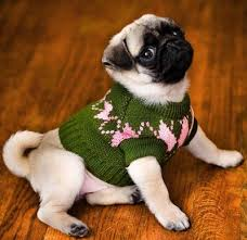 sweater archives dgp for pets
