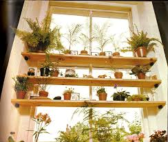 Inside Home Plants by House Plants
