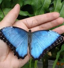 butterfly gallery beautiful wings take flight