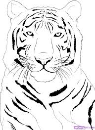 easy drawing pictures tiger drawing art ideas
