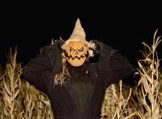 cornbelly s corn maze cornbellys on