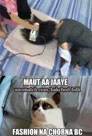 Rofl Meme - inspirational rofl meme 1000 images about bakchod billi cats on