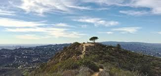 the wisdom tree is becoming an l a landmark but will fame kill