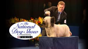who won the dog show on thanksgiving the national dog show what time u0026 channel does it air today