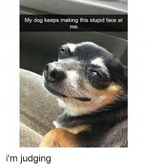 Stupid Face Meme - my dog keeps making this stupid face at me i m judging meme on me me