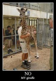 Drunk Giraffe Meme - oh no my brother you gots ta get your own giraffe pictures photos