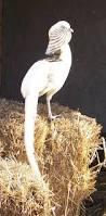 210 best pheasants images on pinterest pheasant turkey and