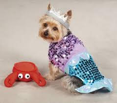 halloween for dogs costumes beachy halloween costumes for your pooch inspire reef