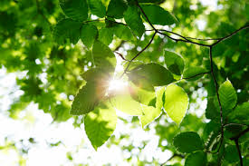 how to determine sunlight levels for houseplants