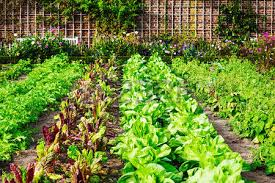 vegetable gardening images u0026 stock pictures royalty free