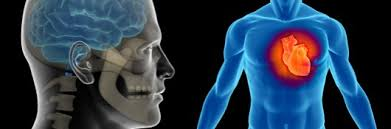 Outline The Anatomy And Physiology Of The Human Body Online Course Anatomy And Physiology 101 Ceu Certificate
