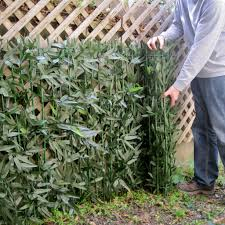 live bamboo fence design and ideas of house