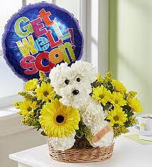 dog flower arrangement sick as a dog 1800flowers 159226