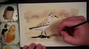 sandpiper watercolor speedpaint plus time with the family youtube