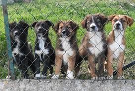 cani in cerca di casa annunci di adozione cucciolo di taglia piccola cani di