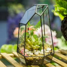 bonsai irregular glass box tabletop succulent glass geometric