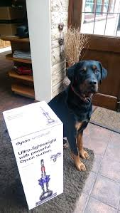 dyson light ball animal reviews a dog owner s review the dyson small ball animal is it worth the