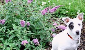 nine flowers for your vegetable garden